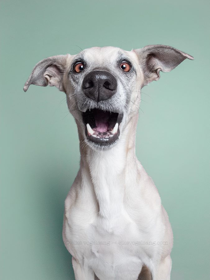 funny-expressive-dog-portraits-photos (10)