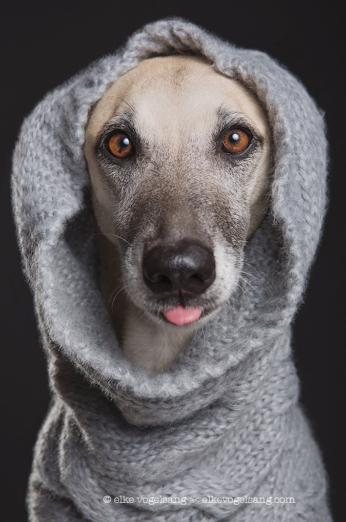 funny-expressive-dog-portraits-photos (11)