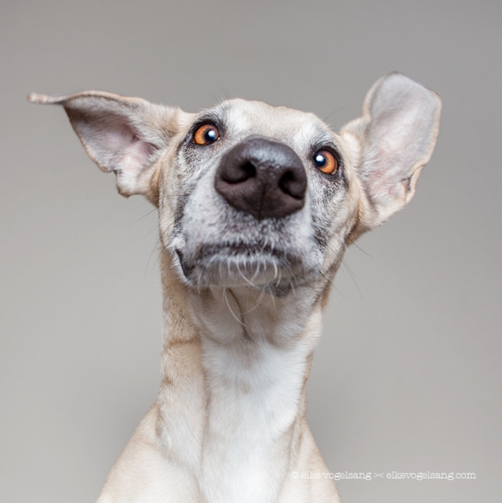 funny-expressive-dog-portraits-photos (12)