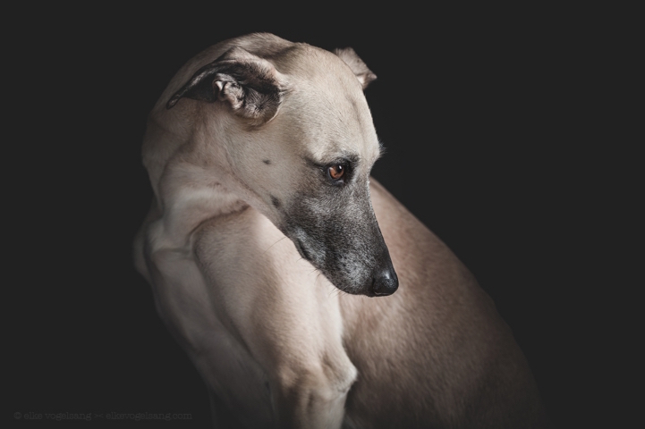 funny-expressive-dog-portraits-photos (13)
