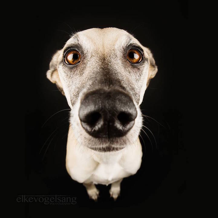 funny-expressive-dog-portraits-photos (3)