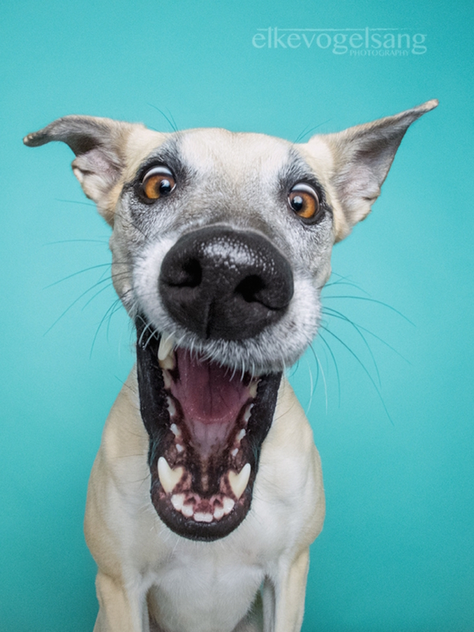 funny-expressive-dog-portraits-photos (4)