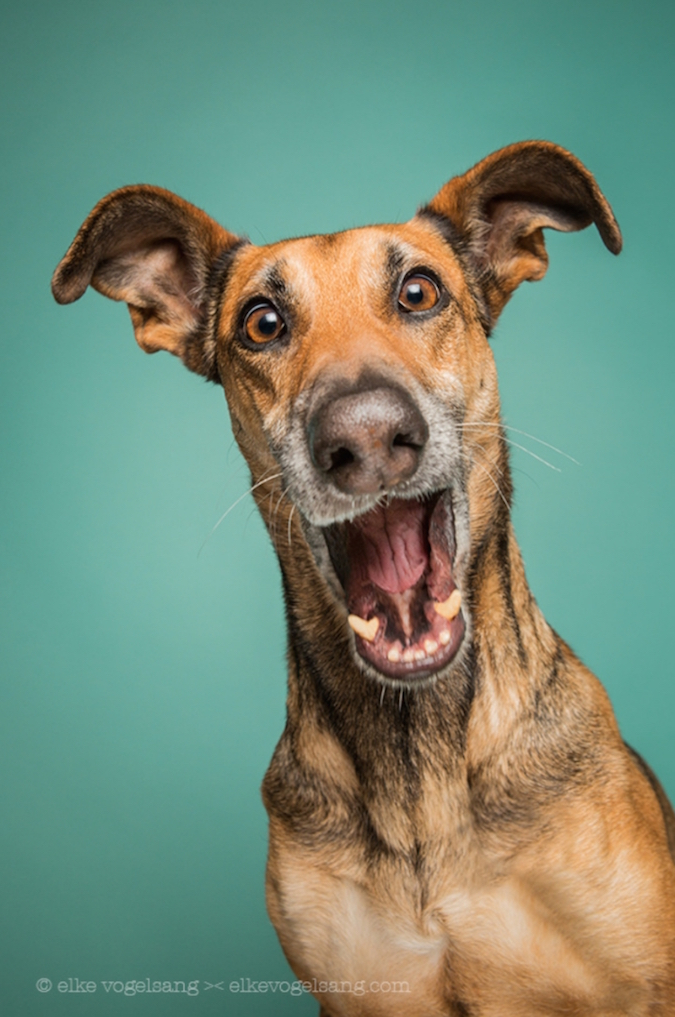 funny-expressive-dog-portraits-photos (6)
