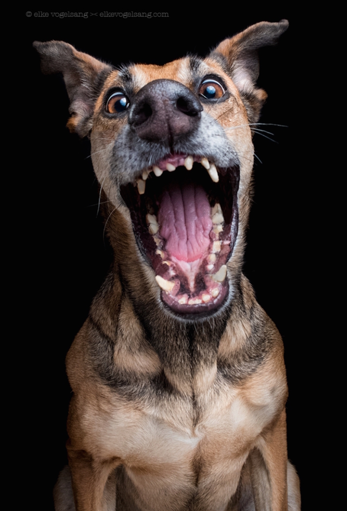 funny-expressive-dog-portraits-photos (8)