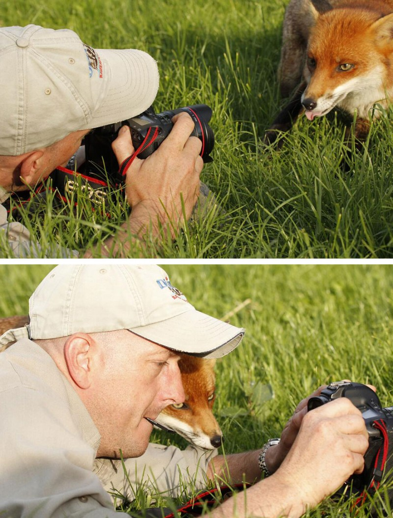 funny-pictures-nature-and-wildlife-photography-behind-lens (11)