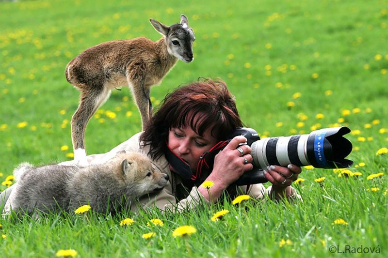 funny-pictures-nature-and-wildlife-photography-behind-lens (13)