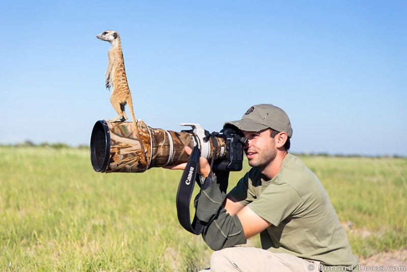 funny-pictures-nature-and-wildlife-photography-behind-lens (15)