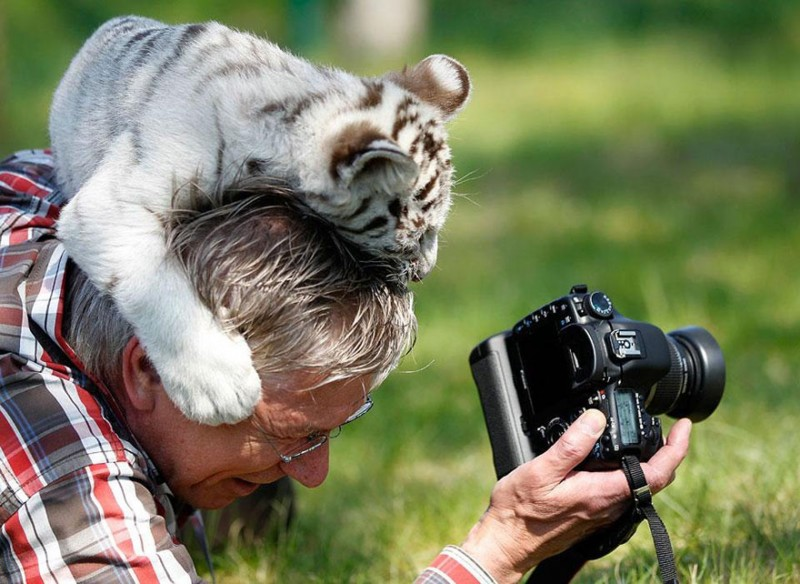 funny-pictures-nature-and-wildlife-photography-behind-lens (9)