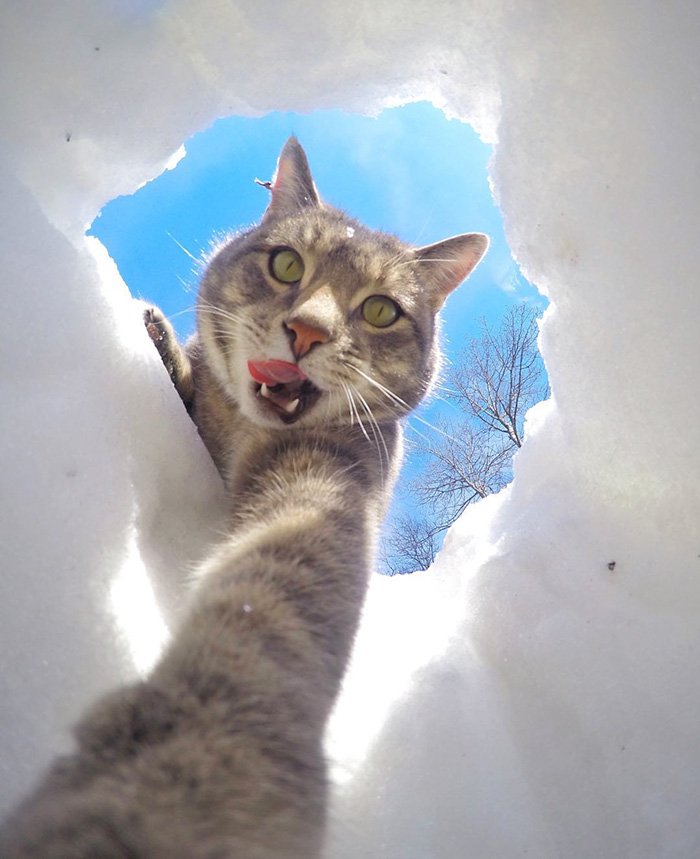 funny-pictures-of-cat-takes-selfies-dogs-gopro-camera (1)