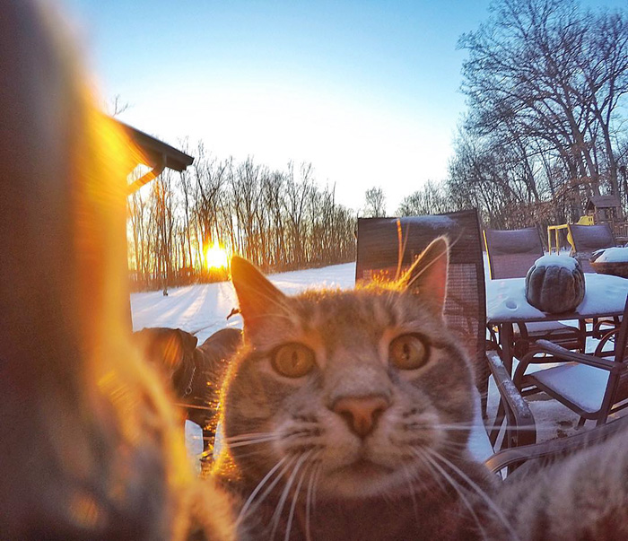 funny-pictures-of-cat-takes-selfies-dogs-gopro-camera (2)
