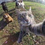 The cat who loves to take selfies