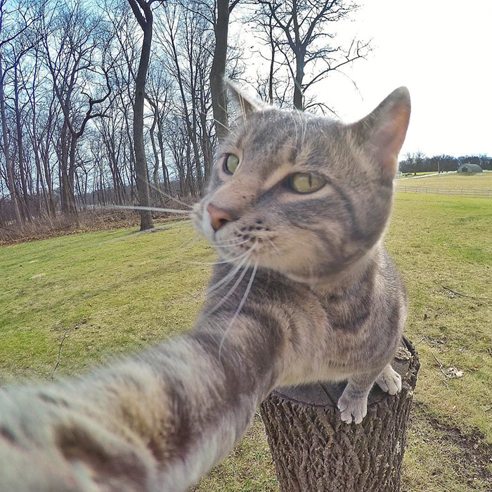 funny-pictures-of-cat-takes-selfies-dogs-gopro-camera (5)