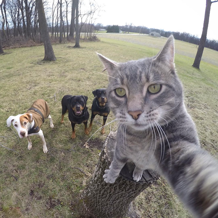 funny-pictures-of-cat-takes-selfies-dogs-gopro-camera (6)