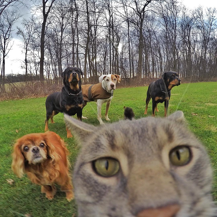 funny-pictures-of-cat-takes-selfies-dogs-gopro-camera (7)