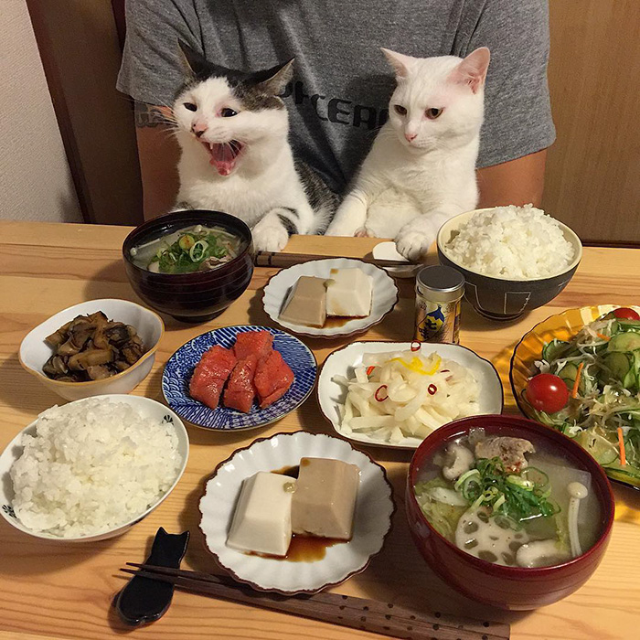 japan-funny-pictures-of-cats-watching-people-eat (1)