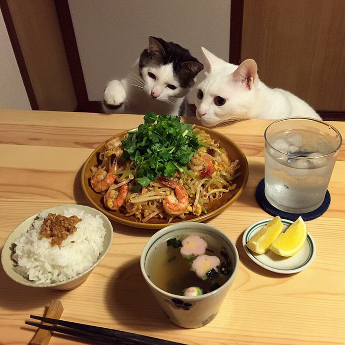 japan-funny-pictures-of-cats-watching-people-eat (11)