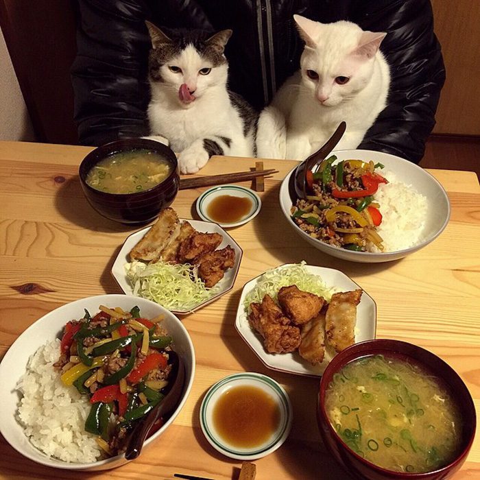 japan-funny-pictures-of-cats-watching-people-eat (12)