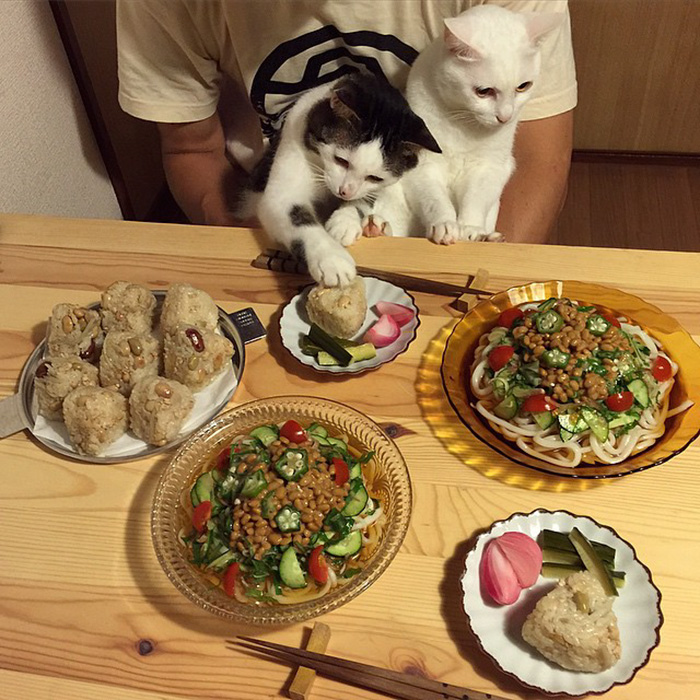 japan-funny-pictures-of-cats-watching-people-eat (13)