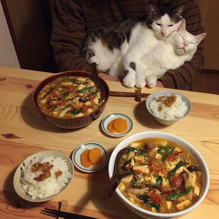 japan-funny-pictures-of-cats-watching-people-eat (14)