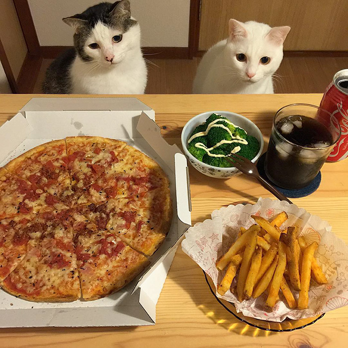 japan-funny-pictures-of-cats-watching-people-eat (15)