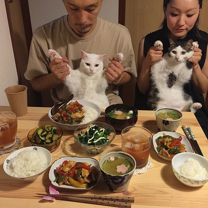 japan-funny-pictures-of-cats-watching-people-eat (16)