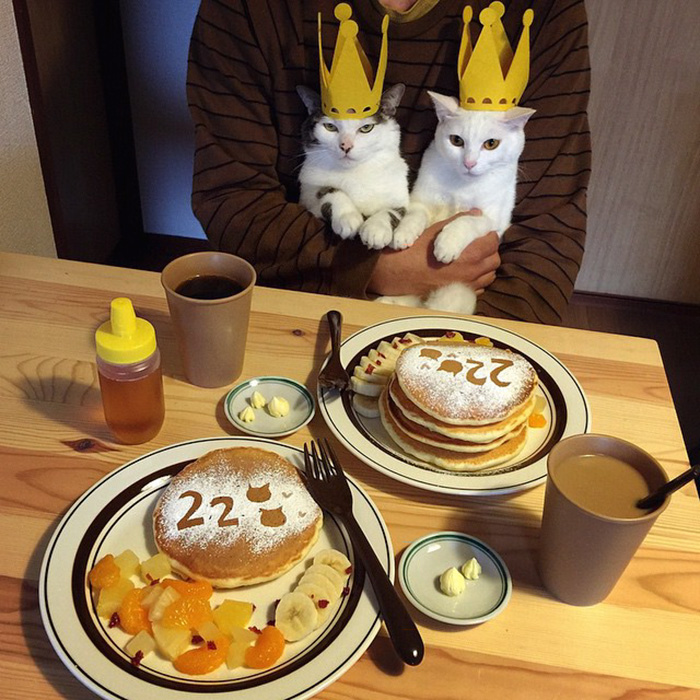 japan-funny-pictures-of-cats-watching-people-eat (17)