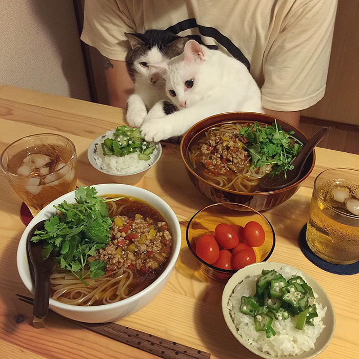 japan-funny-pictures-of-cats-watching-people-eat (2)