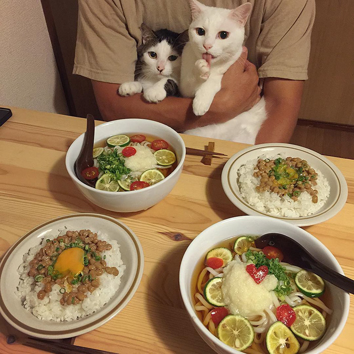 japan-funny-pictures-of-cats-watching-people-eat (3)