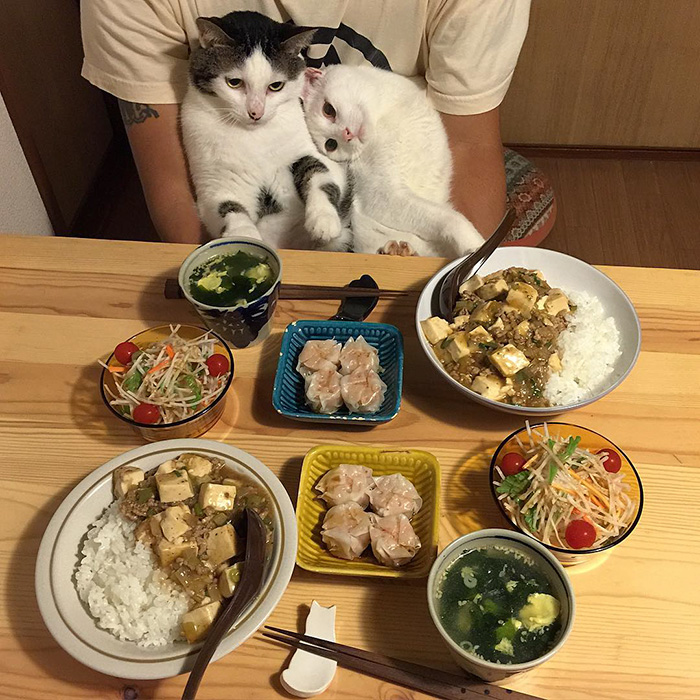 japan-funny-pictures-of-cats-watching-people-eat (4)
