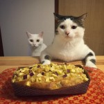 Funny pictures of cats watching their owners eat