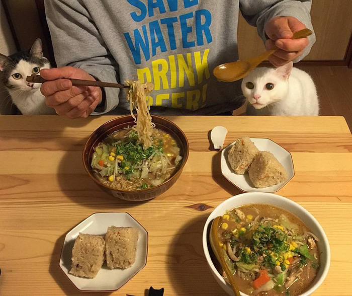 japan-funny-pictures-of-cats-watching-people-eat (6)