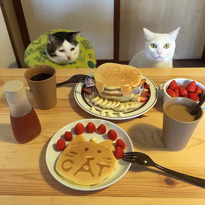 japan-funny-pictures-of-cats-watching-people-eat (7)