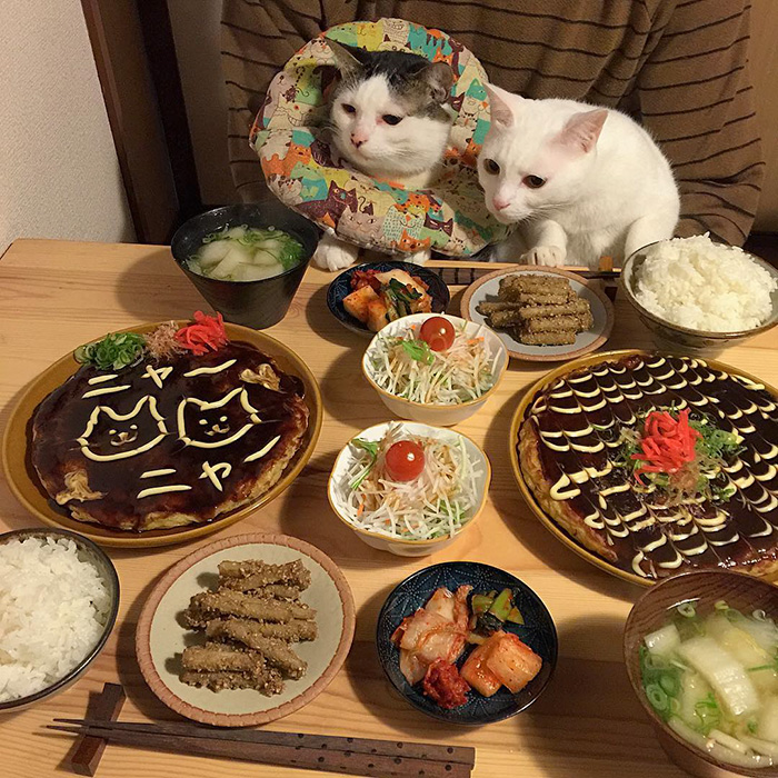 japan-funny-pictures-of-cats-watching-people-eat (8)