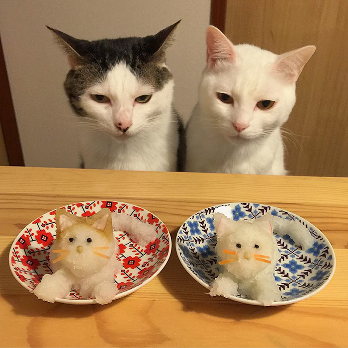 japan-funny-pictures-of-cats-watching-people-eat (9)
