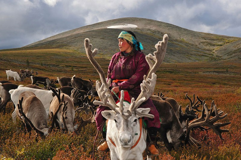 mongolia-reindeer-tribe-Dukha-people-photographs (1)