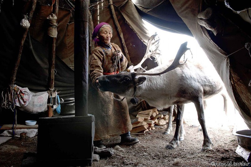 mongolia-reindeer-tribe-Dukha-people-photographs (10)