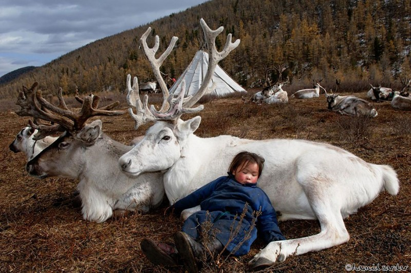 mongolia-reindeer-tribe-Dukha-people-photographs (6)