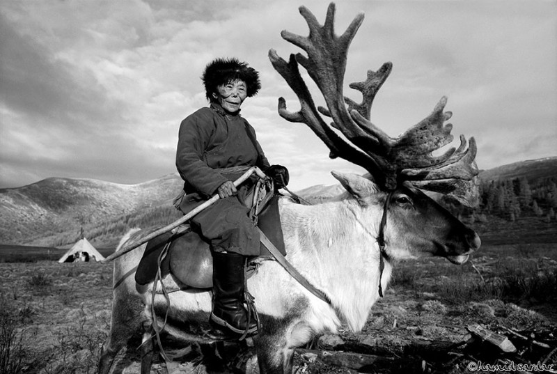 mongolia-reindeer-tribe-Dukha-people-photographs (7)