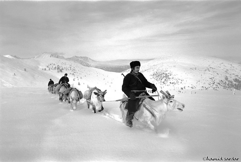 mongolia-reindeer-tribe-Dukha-people-photographs (8)