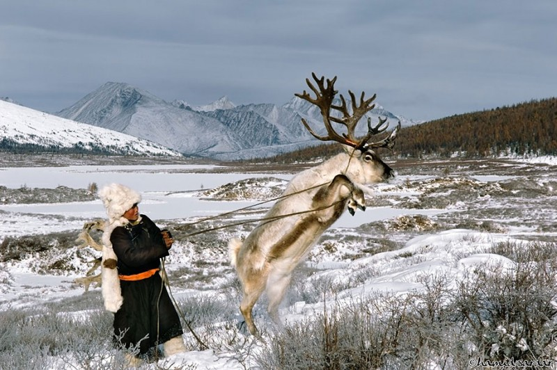 mongolia-reindeer-tribe-Dukha-people-photographs (9)