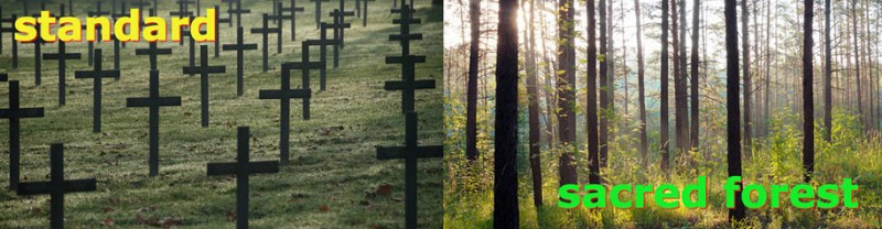 new-concept-biodegradable-coffin-burial-memorial-forest (5)