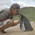 The little penguin swims 8,000km every year to live with the old man who saved its life four years ago