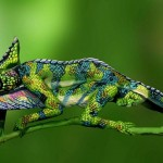 Incredible body art illusions – A vivid chameleon consisting of two body-painted women