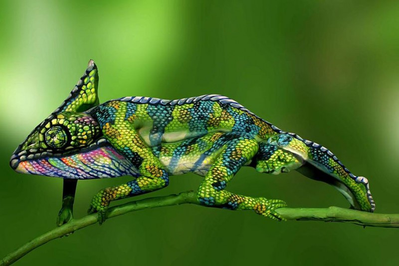 stunning-amazing-body-art-painting-chameleon-images (1)