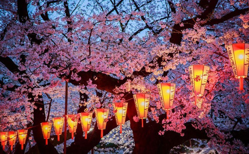 stunning-beautiful-japan-cherry-blossoms-season-pictures (12)