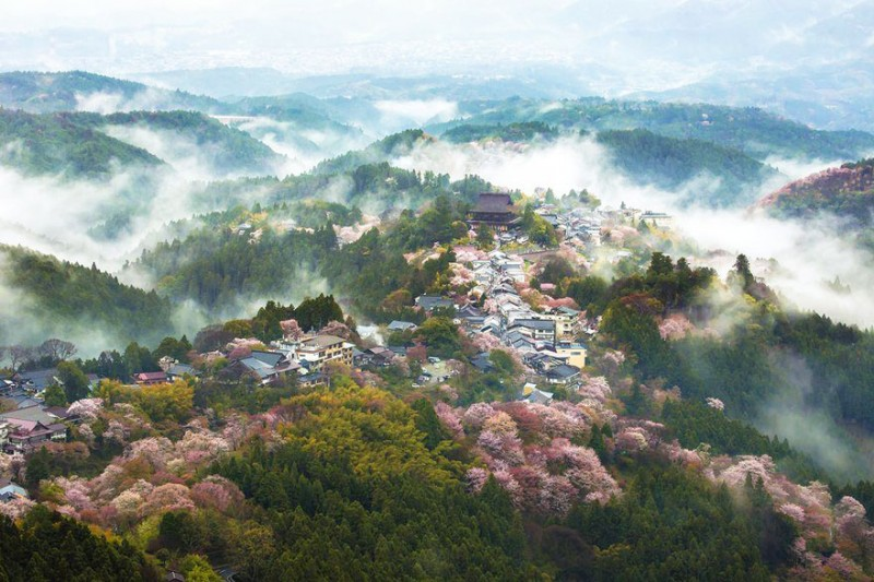 stunning-beautiful-japan-cherry-blossoms-season-pictures (15)