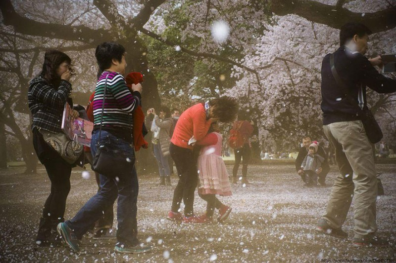 stunning-beautiful-japan-cherry-blossoms-season-pictures (7)