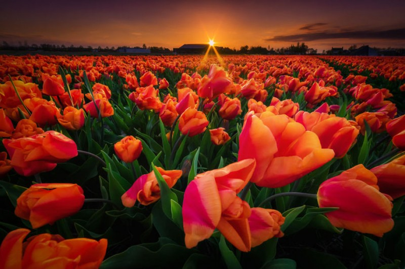 stunning-beautiful-netherland-pictures-amazing-photgraphy (13)