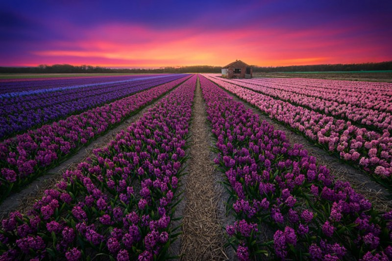 stunning-beautiful-netherland-pictures-amazing-photgraphy (15)