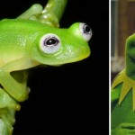 The newly discovered frog in Costa Rica looks like Kermit The Frog